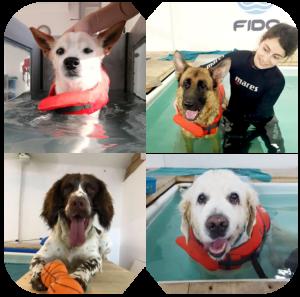 הידרותרפיה לכלבים - FIDO